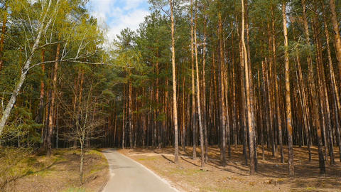 Road in a pine forest. Picturesque landscape. Movement of the camera forward Footage