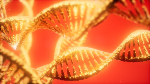 structure of the DNA double helix animation ビデオ