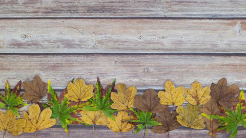 Green, yellow and brown leaves disappear from the bottom of the table - Stop motion animation Animation