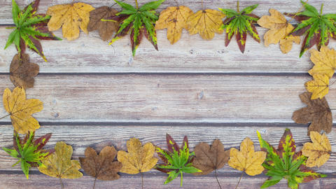 Beautiful frame of green, yellow and brown leaves - Stop motion animation Animation