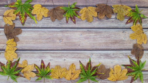 Green, yellow and brown leaves make frame with empty space in the middle for text - Stop motion Animation