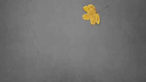 Yellow leaf falling on gray background - Stop motion animation Animation