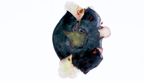 4k slow motion video of squeezing and bursting blueberry against white Archivo