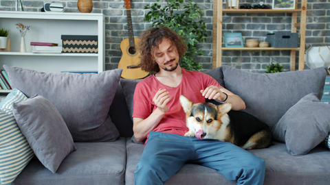 Loving owner caressing cute corgi doggy resting on couch in apartment Archivo