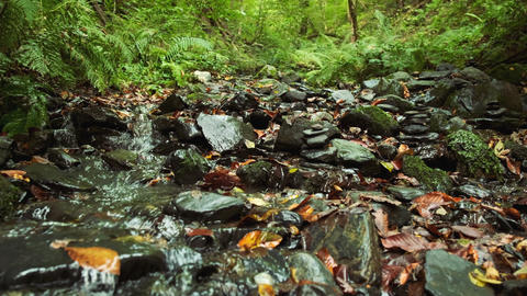 Refreshing and relaxing creek runs through the forest on the border of Europe Footage