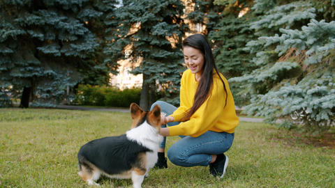 Pretty young woman playing with corgi dog on grass in park enjoying friendship Archivo