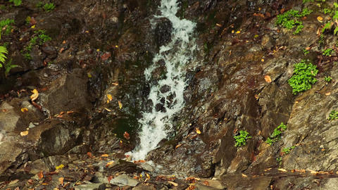 Water flows over the falls and down through a leafy, rock channel. Forest Archivo