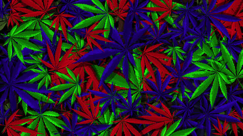 Cannabis Vector Multicolor Background Animation
