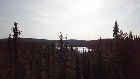 Wilderness lake behind narrow spruce tops in Lapland. Aerial shot Live Action