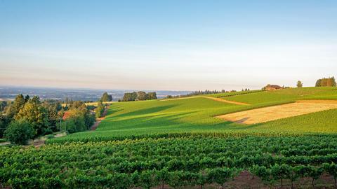 Vineyard Sunrise Time Lapse Footage