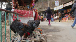 Chickens for sale for sacrifice at Kali Temple,Dakshinkali,Nepal Footage