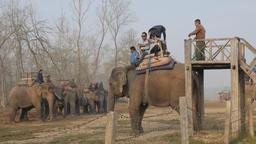 Nepali tourists climbing elephant for safari,Chitwan,National Park,Nepal Footage