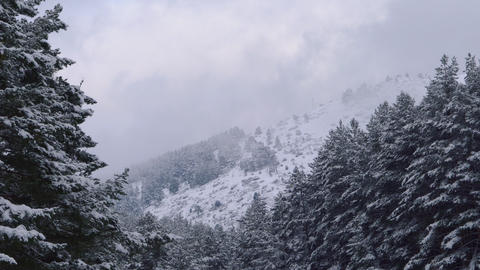 Winter landscape Fir Trees snow covered. Mountain background on winter season Live Action