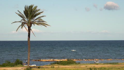 A lone palm tree stands in front of the sea. Blue Mediterranean Sea. The wind Live Action