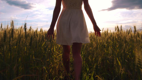 Slow motion - Behind a girl walking through field and touching wheat heads Footage