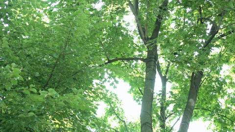Sun And Sky Show Through The Tree Branches Footage