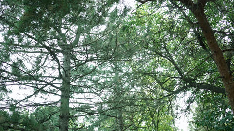 Trees And Leaves Footage