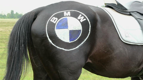 Back part of horse wagging the tail with logo on its hip Footage