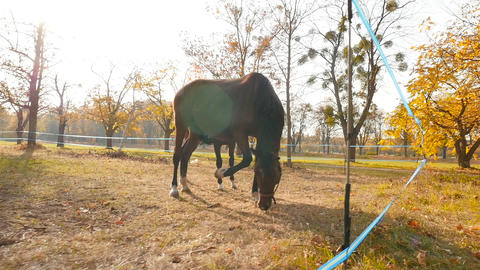 Beautiful horses eat grass in the pasture. Bright sun rays. Autumn weather. Slow Live Action