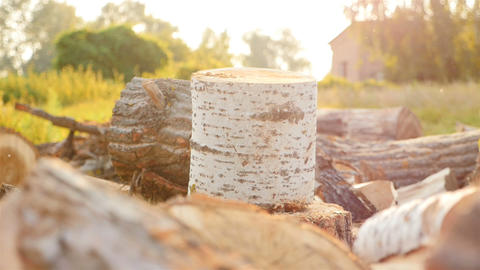 Birch log. Sunset with beautiful sunlight. Picturesque place Live Action