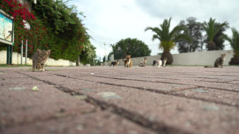 Stray cats on the street. Cats of different breeds run on the street. Cats walk Live Action
