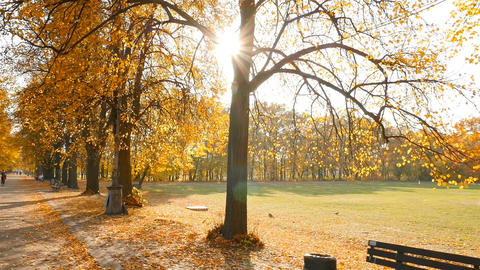 Beautiful autumn park. The sun's rays shine into the camera lens. Camera in Live Action