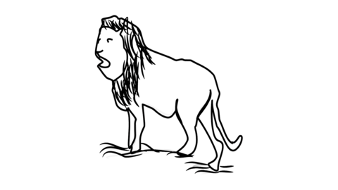Lion icon Line Drawing Animation Transparent Background Vector Motion Graphics Loop CG動画