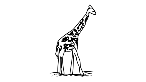 Giraffe Line Drawing Animation Transparent Background Vector Motion Graphics Loop CG動画