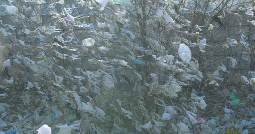 Remnants of white plastic bags on the branchs are swaying in the wind Live Action