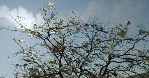 Torn plastic bags on trees. Ecological pollution Live Action