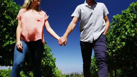 Couple walking hand in hand in vineyard Live Action