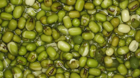 Time-lapse of growing mung beans 1 Stock Video Footage