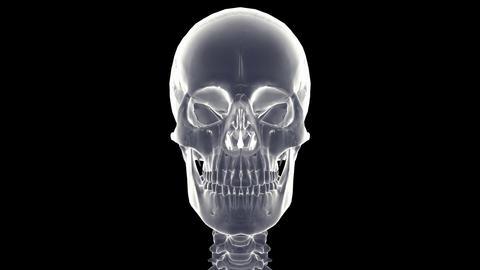 skeleton xray Stock Video Footage