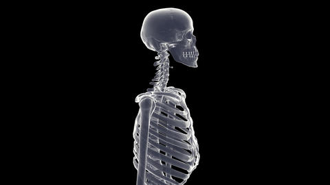skeleton xray Stock Video Footage