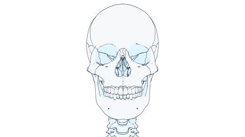 skeleton draw Stock Video Footage