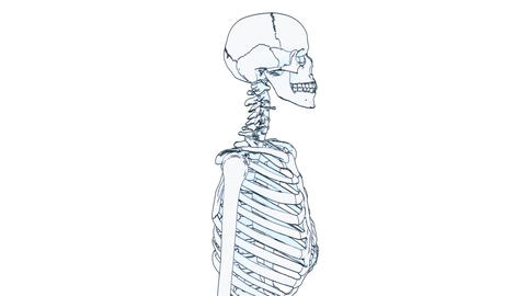 skeleton draw Animation