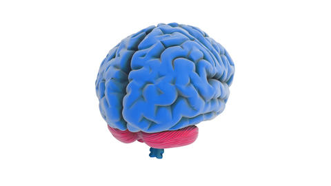 brain model Stock Video Footage