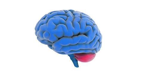 brain model Stock Video Footage