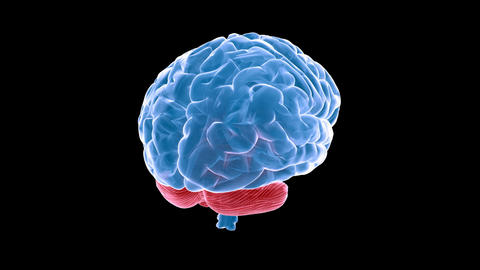 brain xray Stock Video Footage