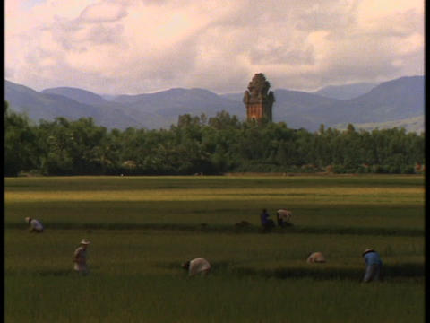 Vietnamese farmers work in fields near a large Hindu temple Stock Video Footage
