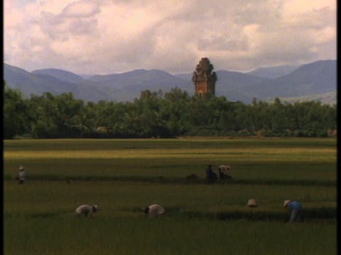 Vietnamese farmers work in fields near a large Hindu temple Footage