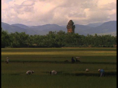 Vietnamese farmers work in fields near a large Hindu temple Footage