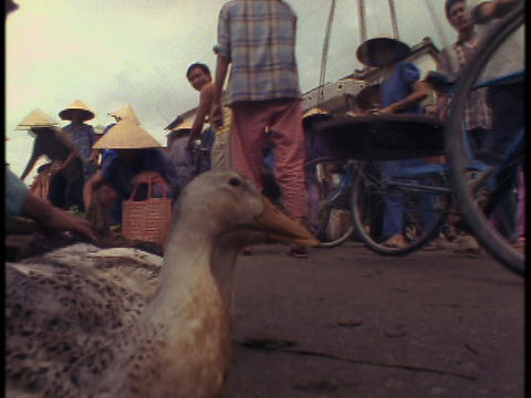 Pedestrians fill a market in Vietnam where ducks are for... Stock Video Footage