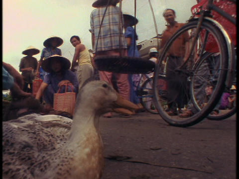 Pedestrians fill a market in Vietnam where ducks are for sale Footage
