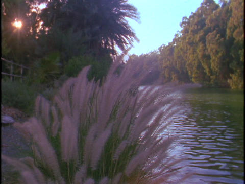 The Jordan river flows between trees and shrubs Stock Video Footage