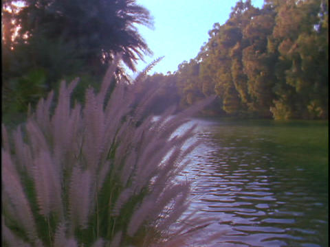The Jordan river flows between trees and shrubs Footage
