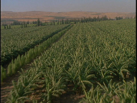 Green crops fill a valley field Stock Video Footage