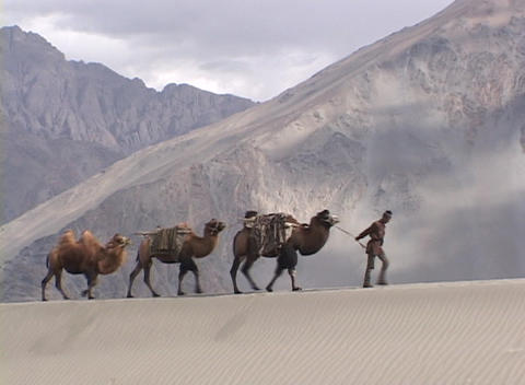 A man leads a camel train across the desert Footage