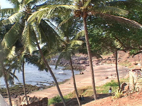 Palm trees grow along a rocky beach Footage