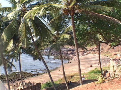 Palm trees grow along a rocky beach Stock Video Footage